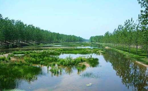 【基地简介】 商丘黄河故道国家森林公园是国家级旅游线路黄河之旅中华民族之魂和河南省0一线东扩旅游热线的重要组成部分,是商丘市三大重点旅游精品景区之一。黄河故道国家森林公园位于商丘市梁园区北部11公里处的明清黄河故道上,总面积65平方公里,是我国罕见的平原人工林国家森林公园,历史文化底蕴深厚,以生态自然景观为主调,环境优美,景色秀丽,现为国家AAA景区。 黄河故道历史悠久,宋建炎二年(公园1128年),东京(今开封)留守于滑县西南人为决河,使黄河决口夺泗入淮,这里成为黄河的
